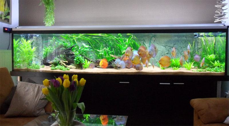 Einbau von led beleichtung f r aquarium mit diskuss mit for Diskus aquarium